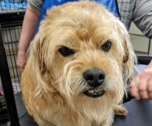 dog groomer in Bremen, OH